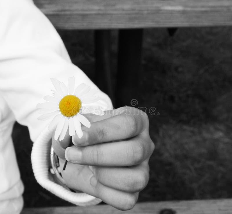 Fiore della holding fotografia stock