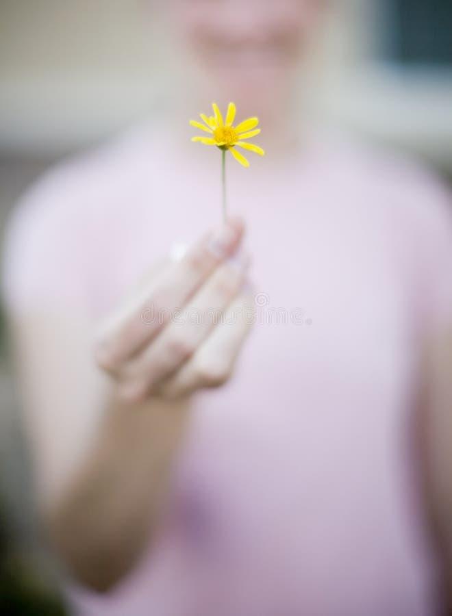 Fiore della holding immagine stock