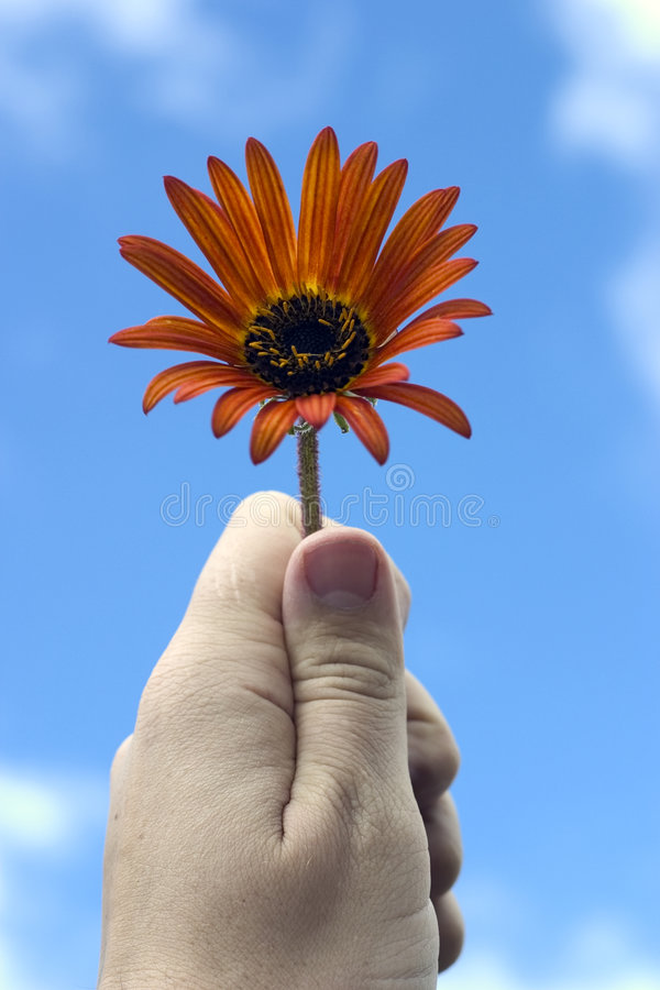 Fiore della holding della mano fotografia stock