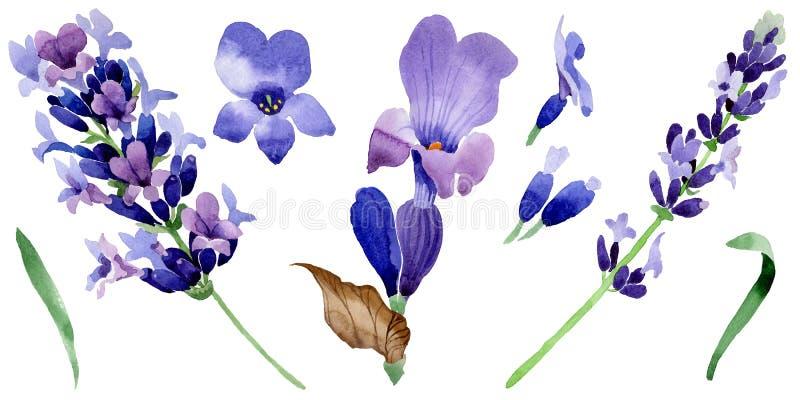 Fiore della lavanda del Wildflower in uno stile dell'acquerello isolato illustrazione di stock