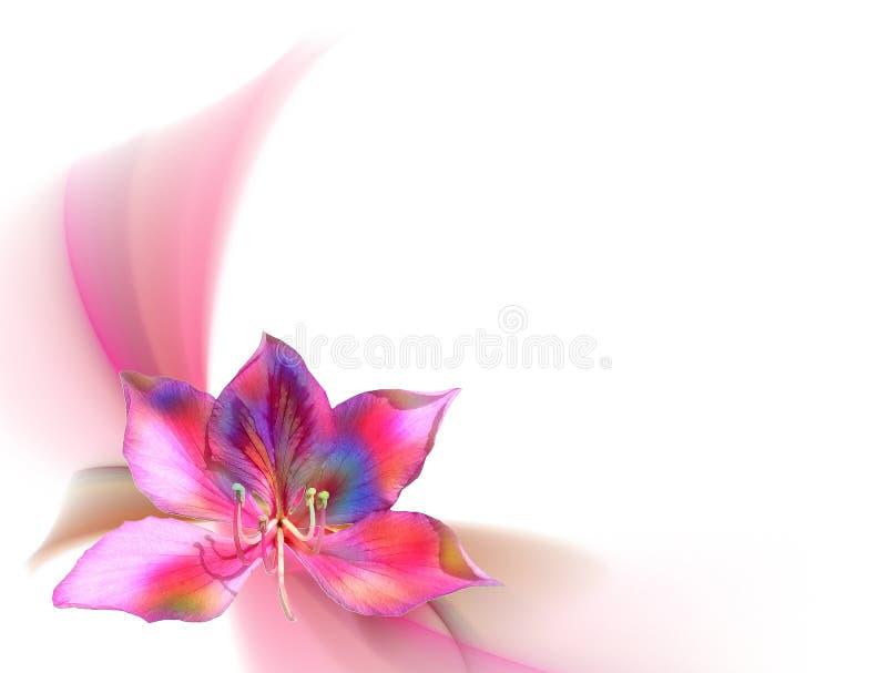 Fiore della magnolia con priorità bassa dentellare astratta fotografie stock
