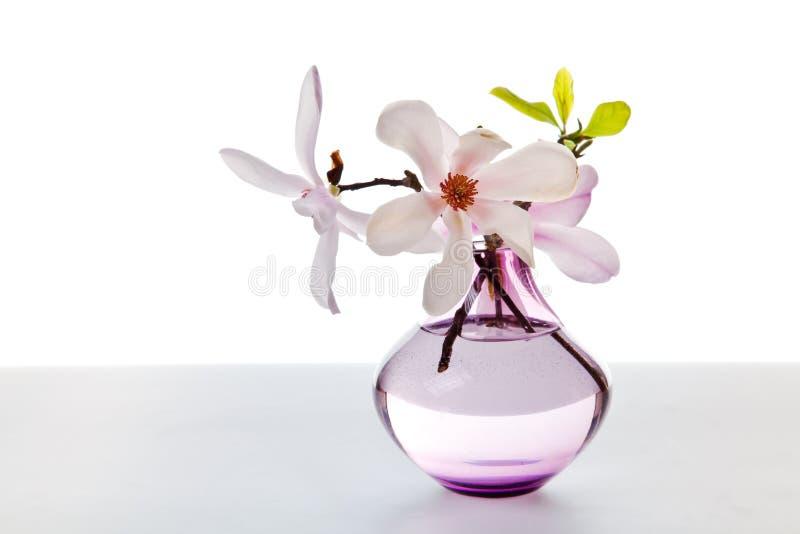 Fiore della magnolia della sorgente fotografia stock libera da diritti