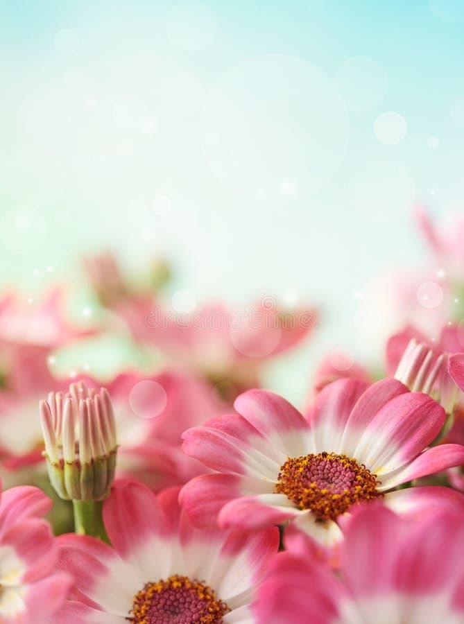 Fiore della margherita di estate fotografia stock libera da diritti