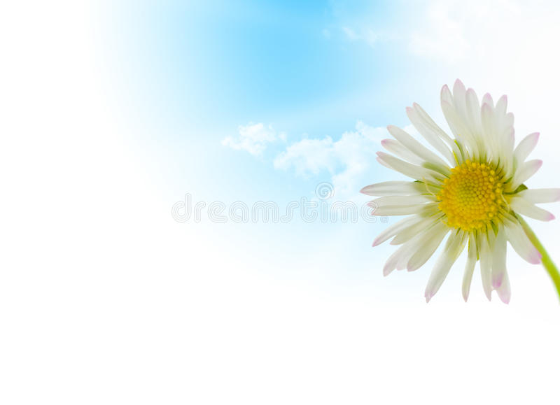 Fiore della margherita, stagione di sorgente di disegno floreale fotografia stock