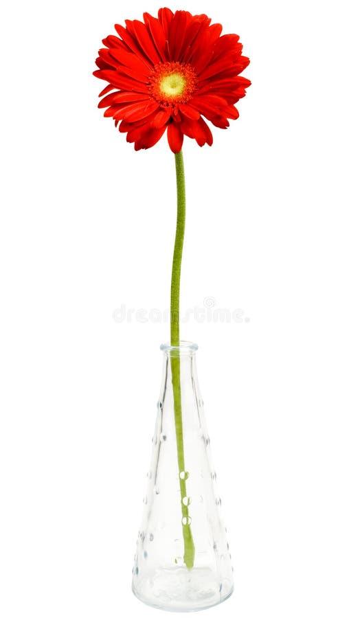 Fiore della margherita in vaso fotografie stock libere da diritti