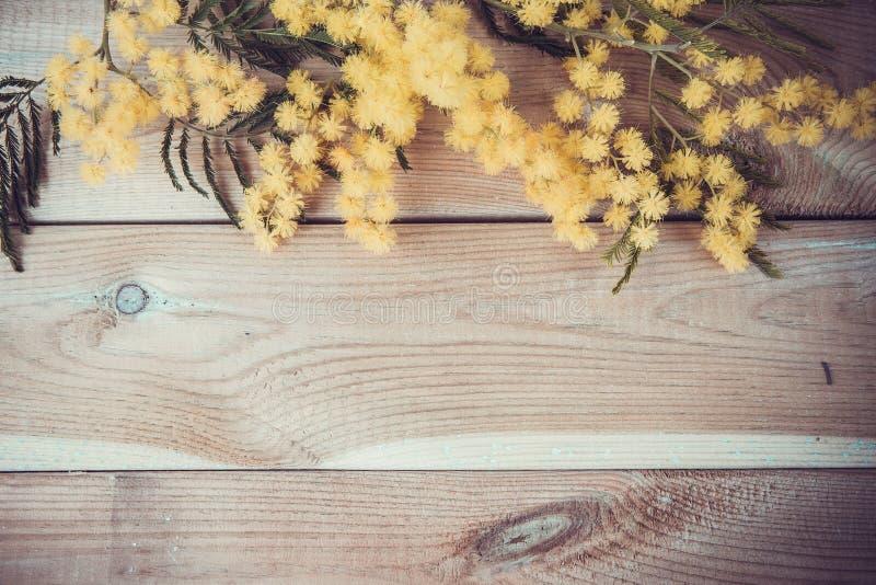 Fiore della mimosa sul legno fotografie stock