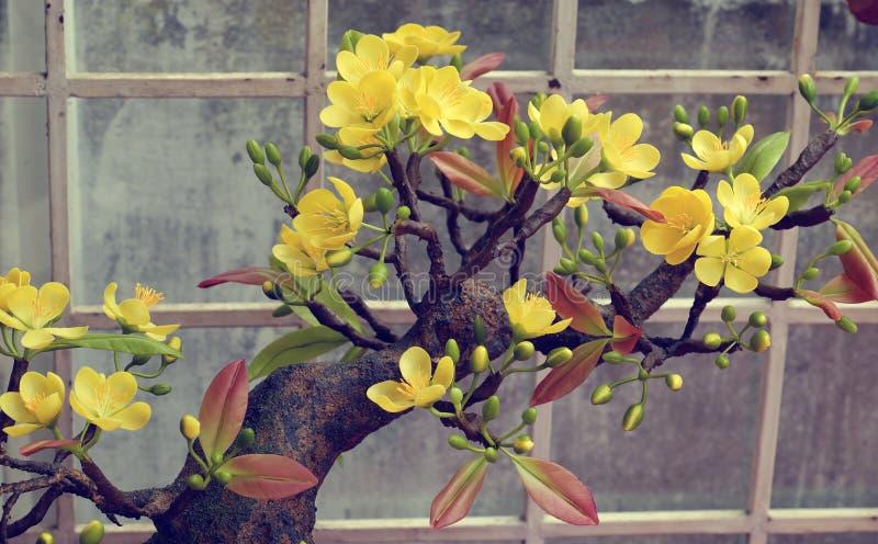 Fiore della molla del Vietnam, fiore dell'albicocca dell'argilla fotografia stock libera da diritti