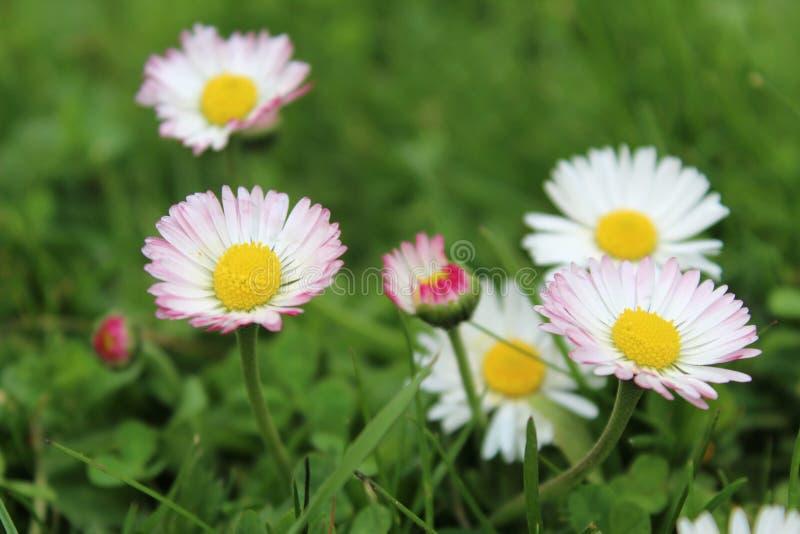 Fiore della natura immagini stock libere da diritti