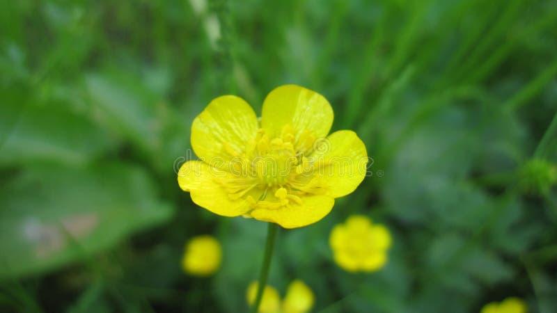 Fiore della natura fotografia stock libera da diritti