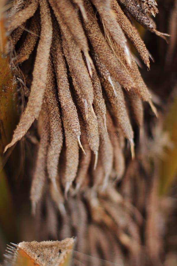 Fiore della palma immagini stock