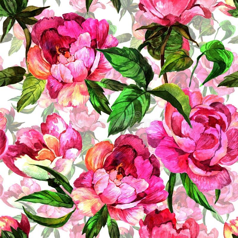 Fiore della peonia del Wildflower nel modello uno stile dell'acquerello illustrazione di stock