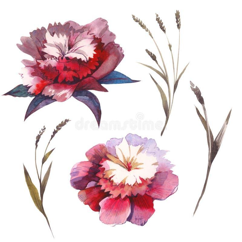 Fiore della peonia del Wildflower in uno stile dell'acquerello isolato illustrazione vettoriale
