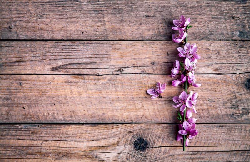 Fiore della pesca su vecchio fondo di legno Fiori della frutta immagini stock libere da diritti