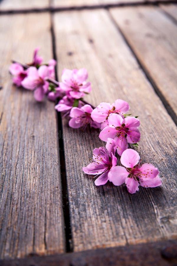 Fiore della pesca su vecchio fondo di legno Fiori della frutta immagini stock