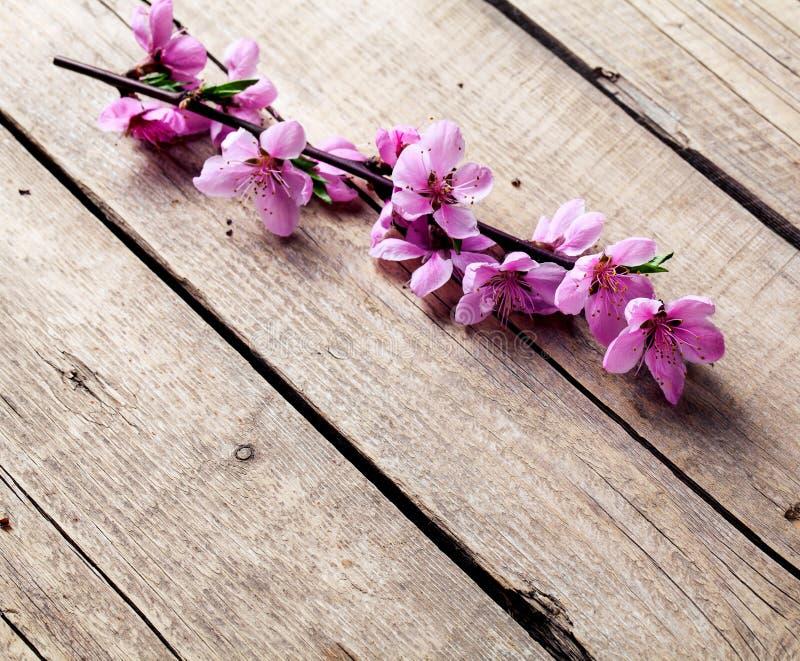 Fiore della pesca su vecchio fondo di legno Fiori della frutta immagine stock libera da diritti