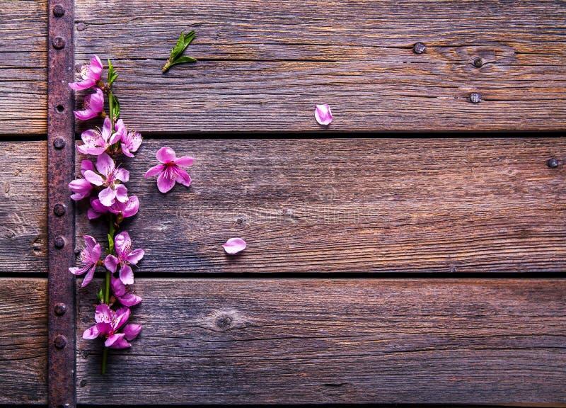 Fiore della pesca su vecchio fondo di legno Fiori della frutta fotografie stock