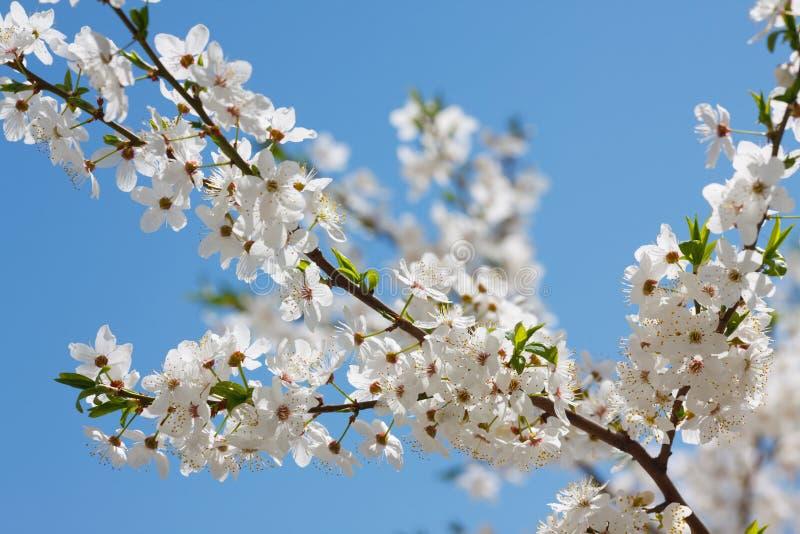 Download Fiore della primavera immagine stock. Immagine di fiori - 30826951
