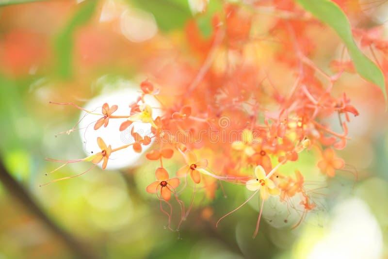 Fiore della sfuocatura e fondo molli del bokeh fotografia stock libera da diritti