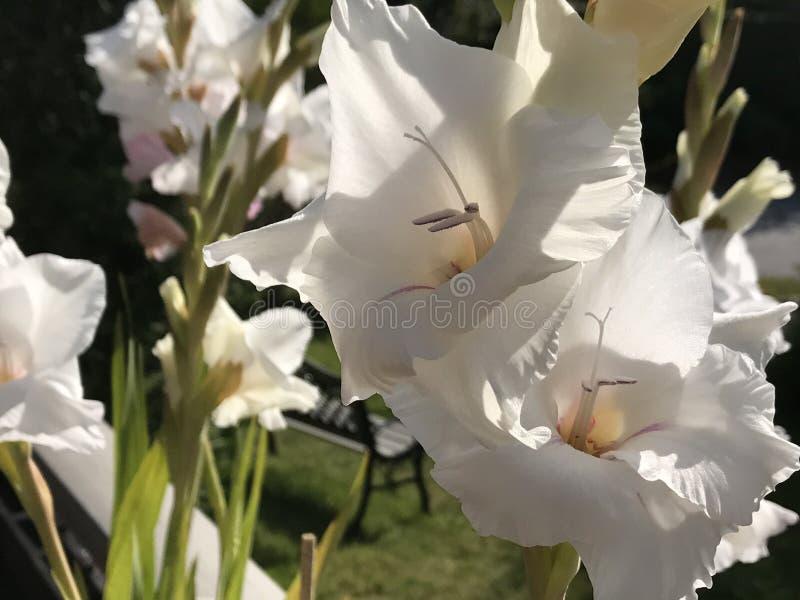 Fiore della sorgente immagini stock