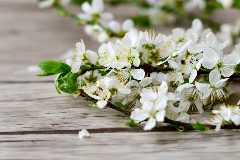 Fiore della sorgente fotografie stock