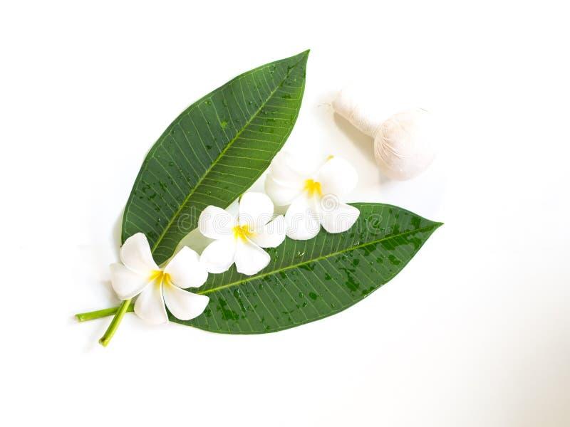 Fiore della stazione termale di plumeria del frangipane su di legno bianco immagini stock