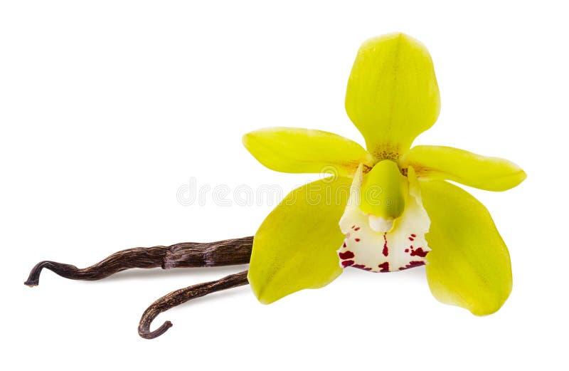 Fiore della vaniglia e 2 bastoni isolati su fondo bianco come elemento di progettazione di pacchetto fotografia stock libera da diritti
