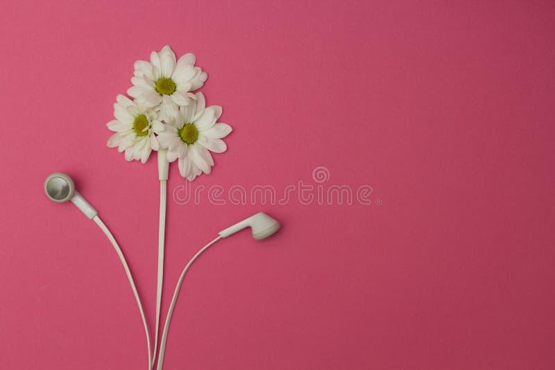 Fiore delle cuffie su un fondo rosa fotografie stock libere da diritti