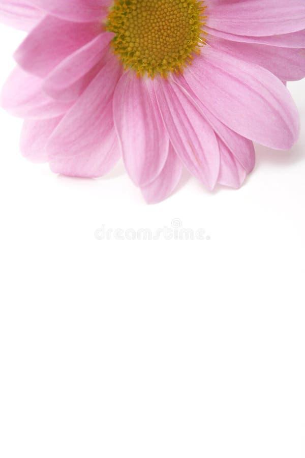 Fiore dentellare immagine stock