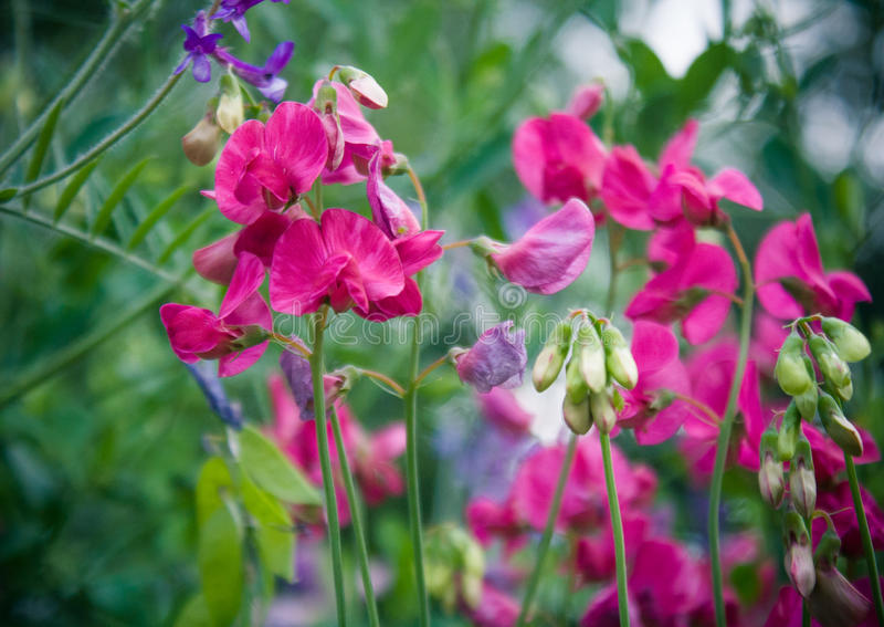 Fiore dentellare del fiore fotografia stock