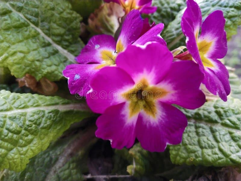 Fiore di alta terra fotografia stock