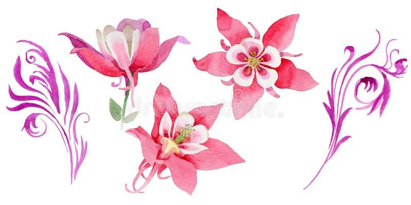Fiore di aquilegia del Wildflower in uno stile dell'acquerello isolato royalty illustrazione gratis