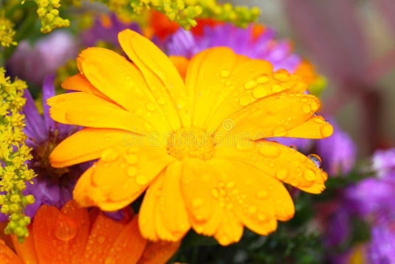 Fiore di autunno con le gocce di pioggia fotografia stock libera da diritti