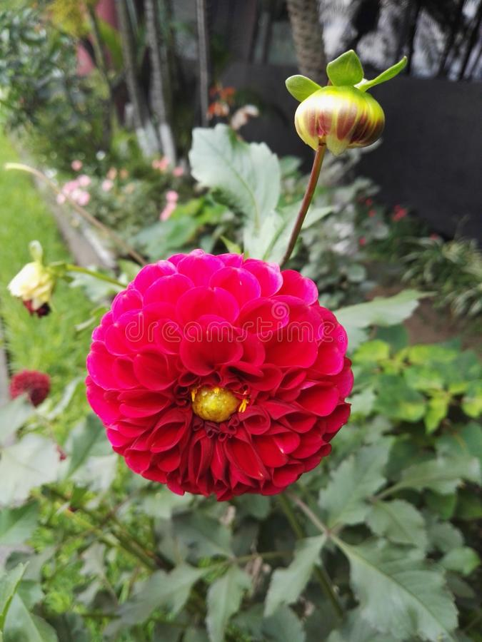 Fiore di Beaty fotografie stock