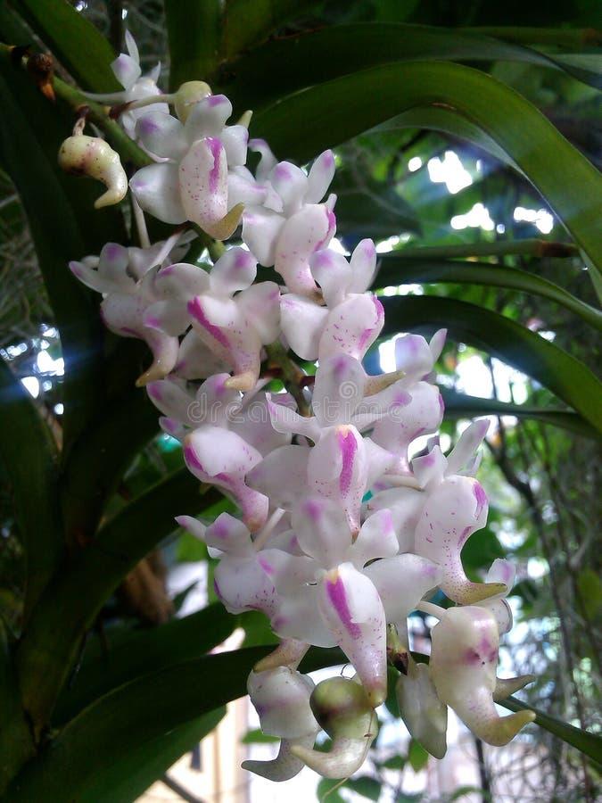 Fiore di bellezza immagine stock