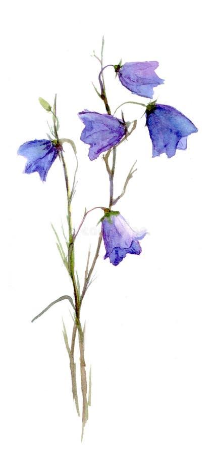 Fiore di Bluebell royalty illustrazione gratis