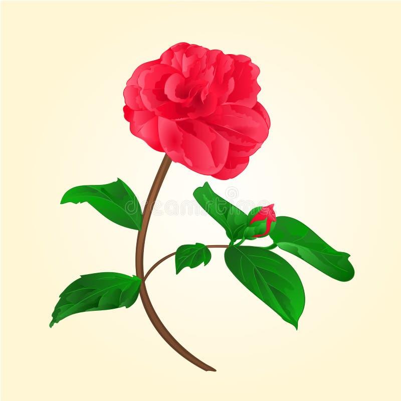 Fiore di Camellia Japonica con il vektor del germoglio royalty illustrazione gratis