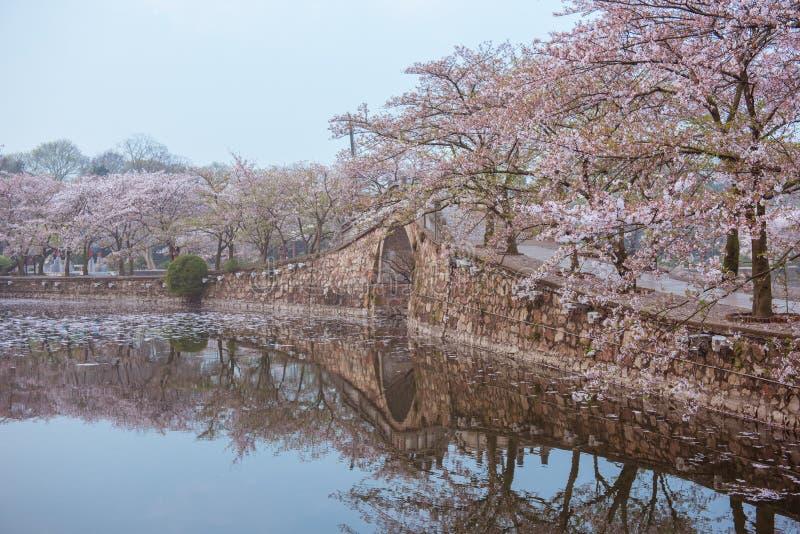 Fiore di ciliegia con il ponte e lo stagno fotografia stock