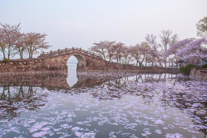 Fiore di ciliegia con il ponte e lo stagno fotografie stock