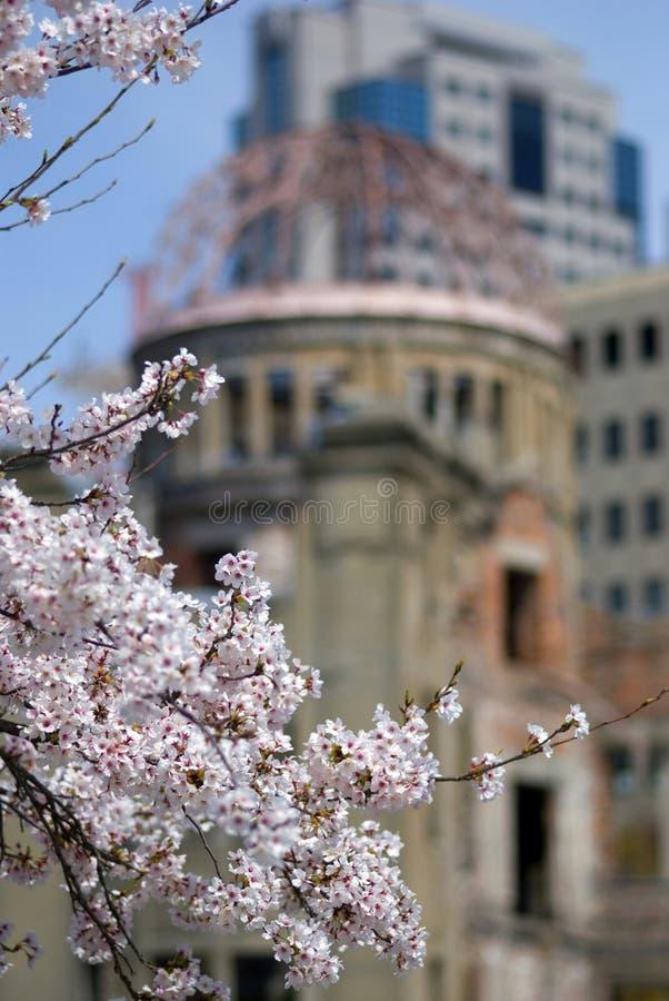 Fiore di ciliegia davanti alla cupola della bomba atomica, Hiroshima, Giappone fotografia stock libera da diritti
