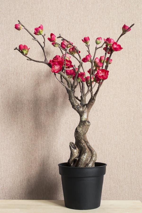 Fiore di ciliegia dei bonsai fotografie stock