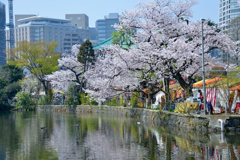 Fiore di ciliegia del Giappone in primavera 2018 immagine stock