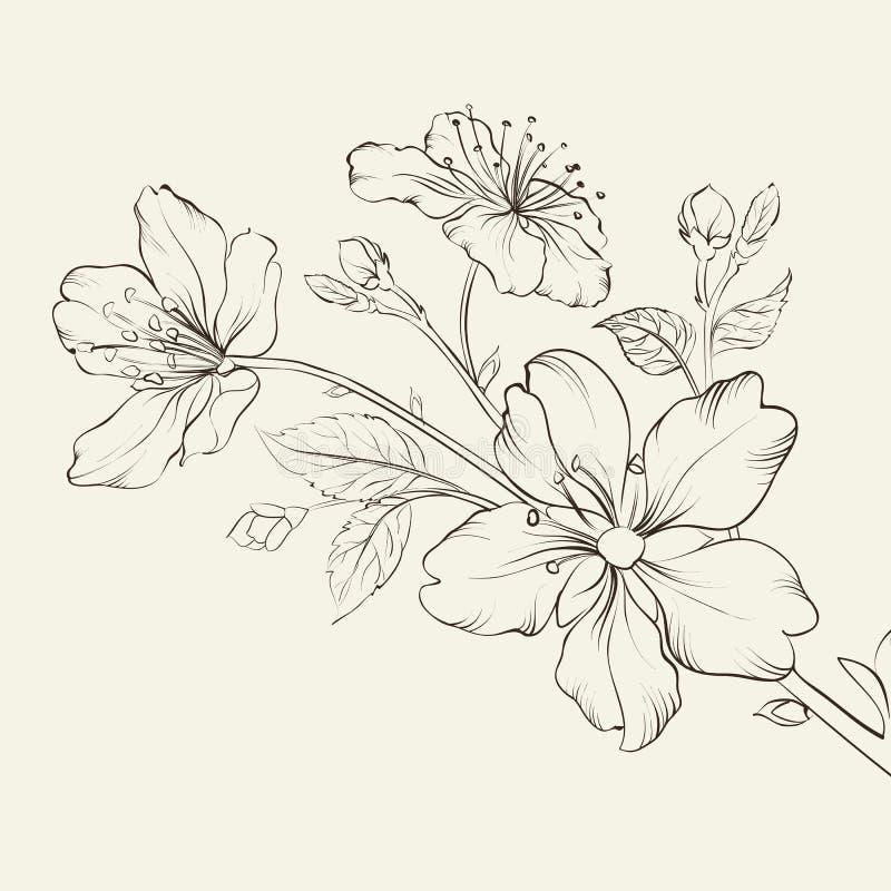 Fiore di ciliegia di calligrafia. royalty illustrazione gratis