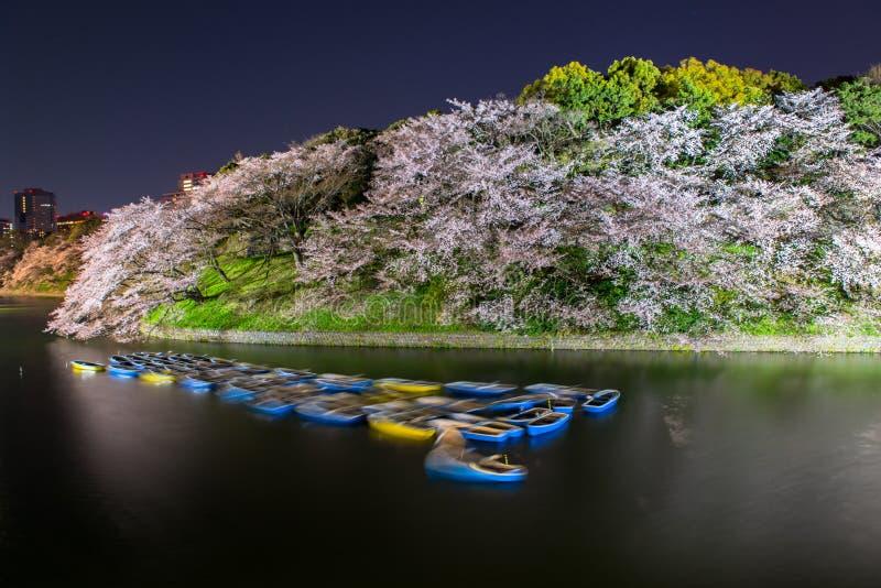 Fiore di ciliegia giapponese in primavera fotografie stock libere da diritti