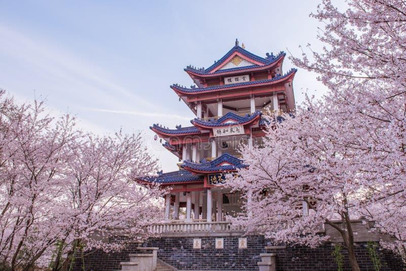 Fiore di ciliegia in giardino cinese Yuantouzhu fotografia stock libera da diritti