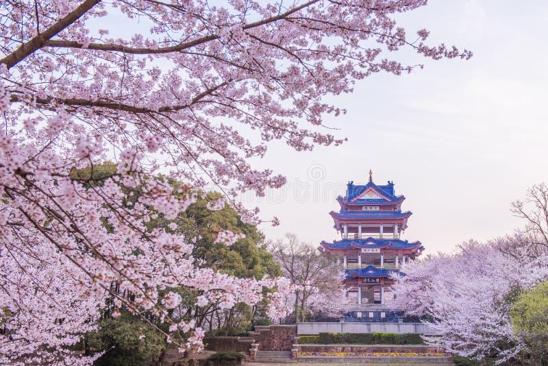 Fiore di ciliegia in giardino cinese Yuantouzhu fotografie stock