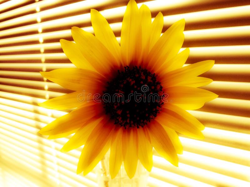 Fiore di Contrablast fotografia stock