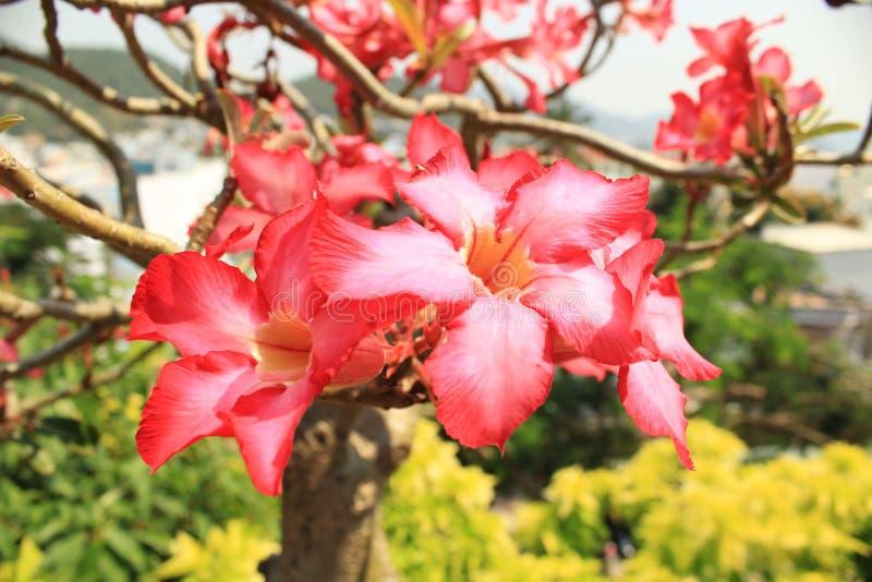 Fiore di denium del  di Ð fotografia stock