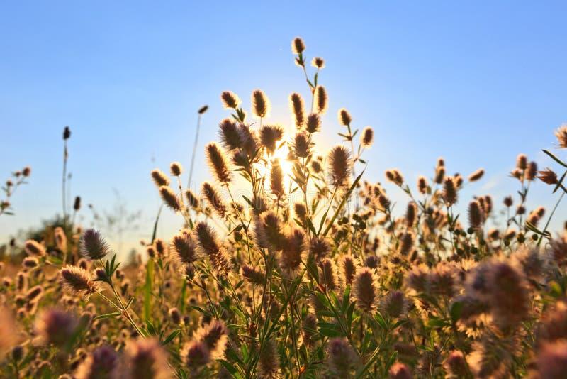 Fiore di estate in steppa immagini stock