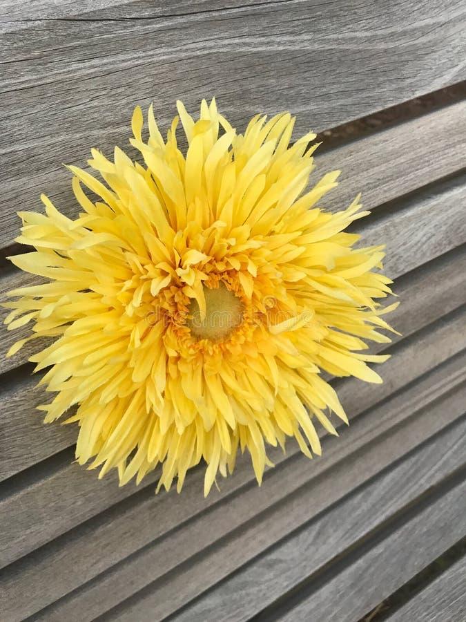 Fiore di estate in un banco immagine stock
