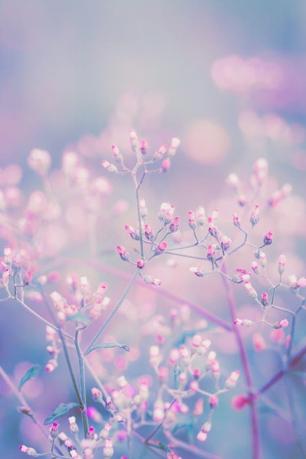 Fiore di fantasia, fondo d'annata dei pastelli della natura fotografia stock